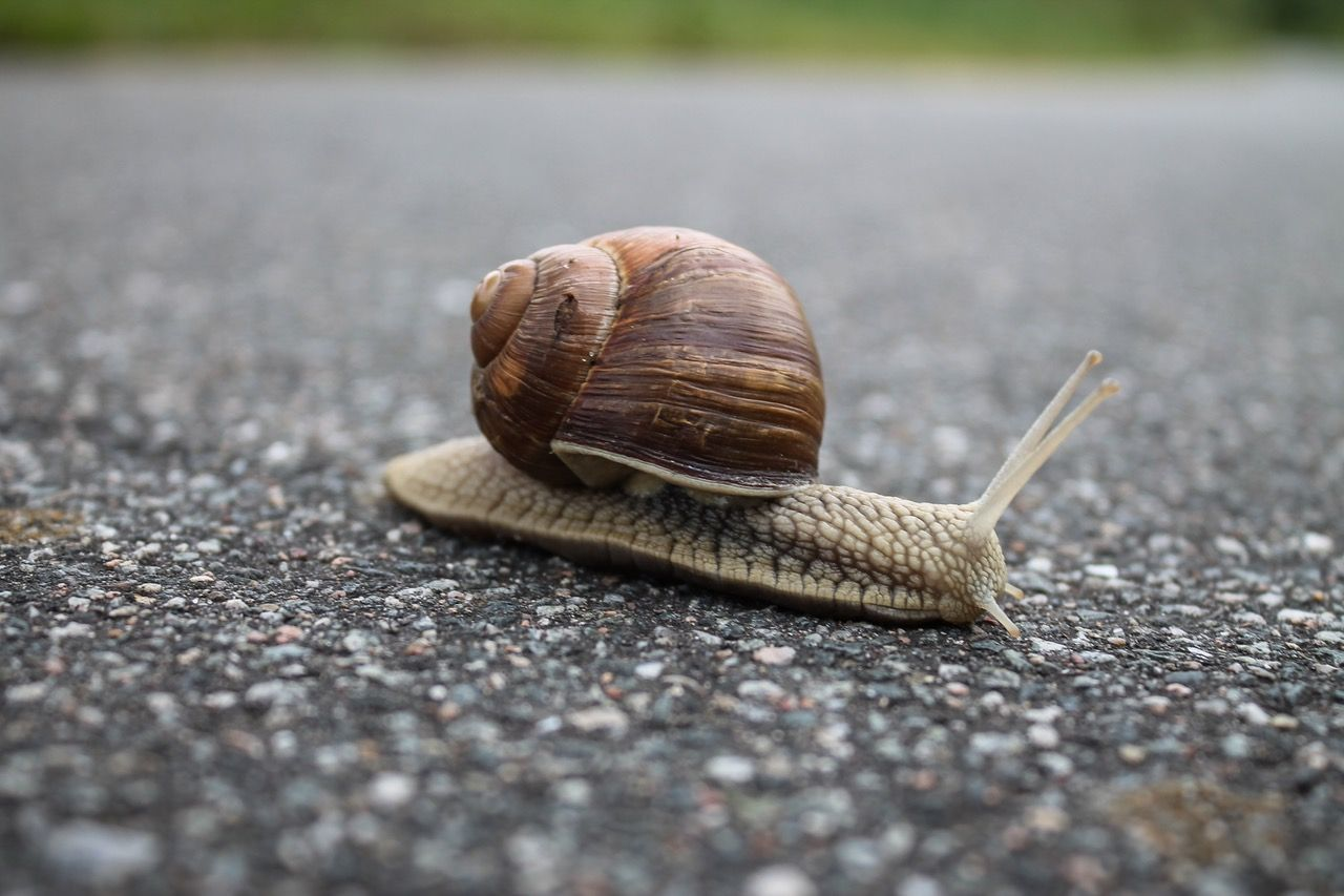 slow snail crossing the street